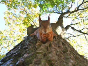photo of a squirrel holding a nut on a branch